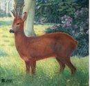 JVD - Tierbildauflage jung. Hirsch