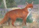 JVD - Tierbild Fuchs