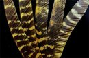 2_Truthahnfedern osage gefärbt 30 Formen
