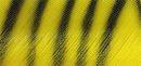 zebra gelb/schwarz