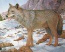 JVD - Tierbildauflage Wolf