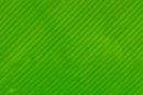 einfarbig neon grün