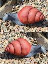 T.C. Targets Little Snail