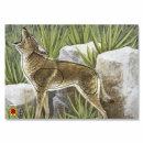 DFBV / IFAA Kojote Gruppe 3